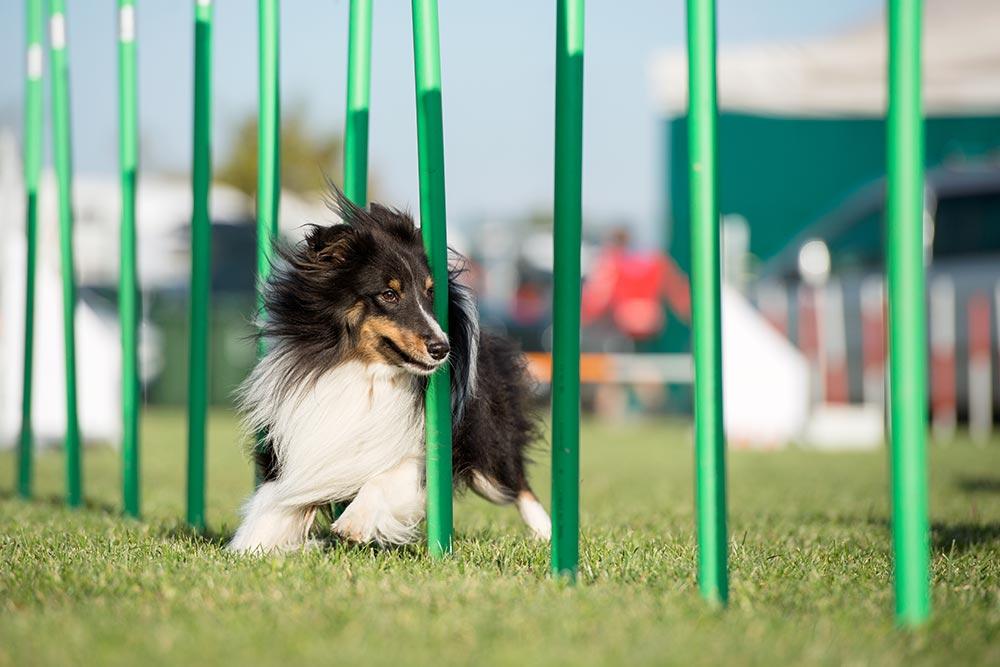 azienda alimentazione cani sportivi