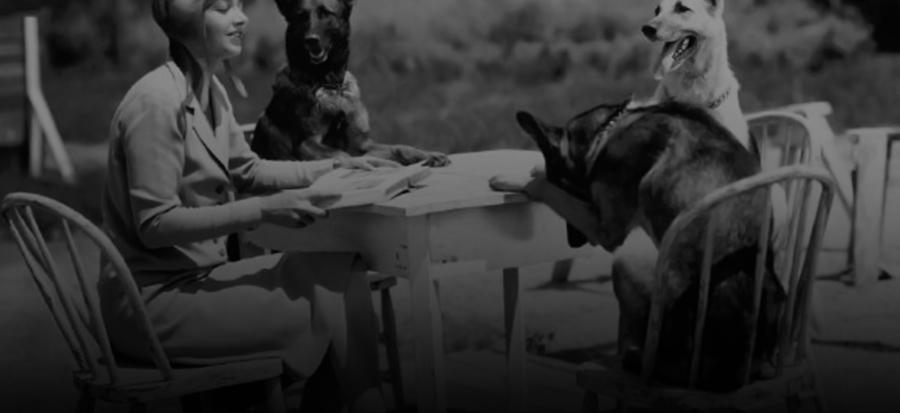 pet food italia azienda