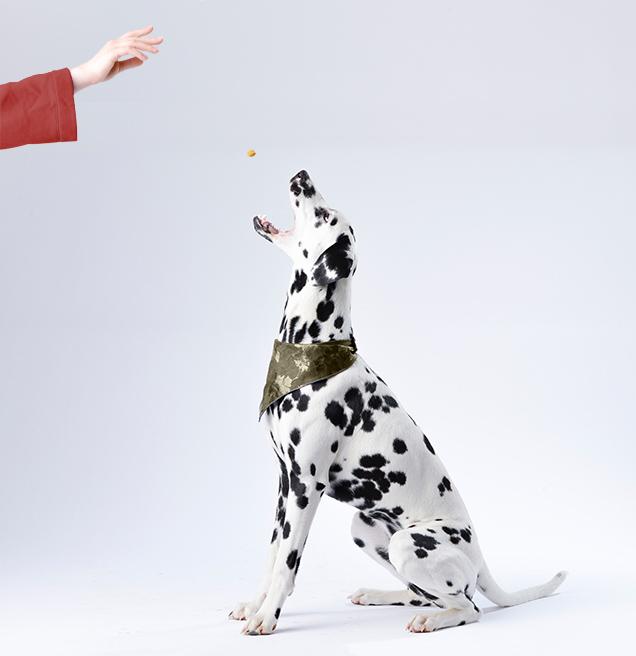 Richiedi un consiglio o una consulenza su quale cibo, crocchetta o integratore è più adatto per i tuoi cani, scrivi | Imperial Food