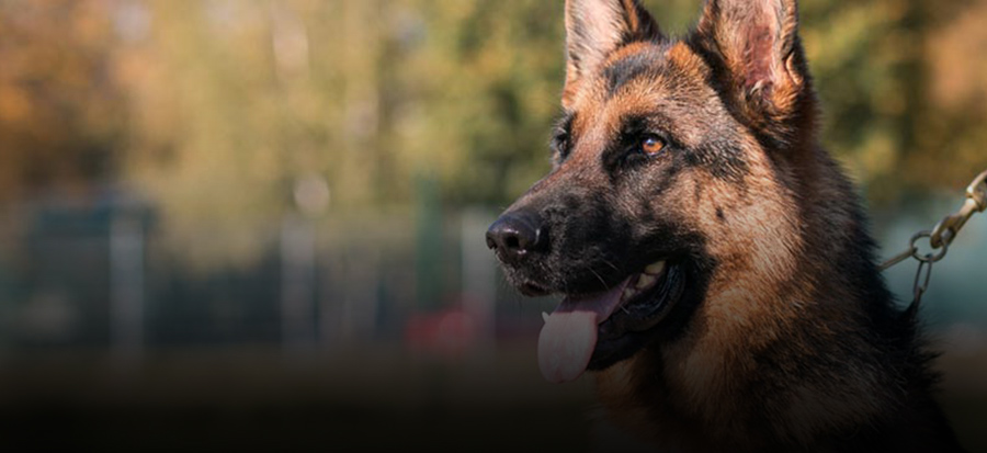 alimentazione per cani da caccia