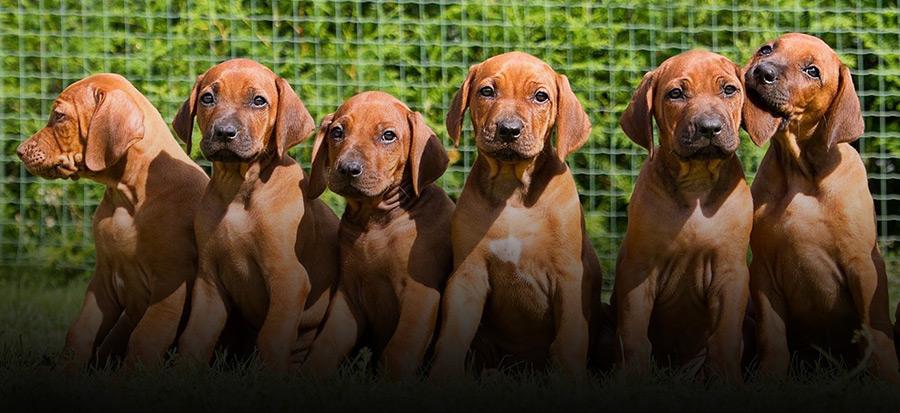 crocchette per cani allevatori