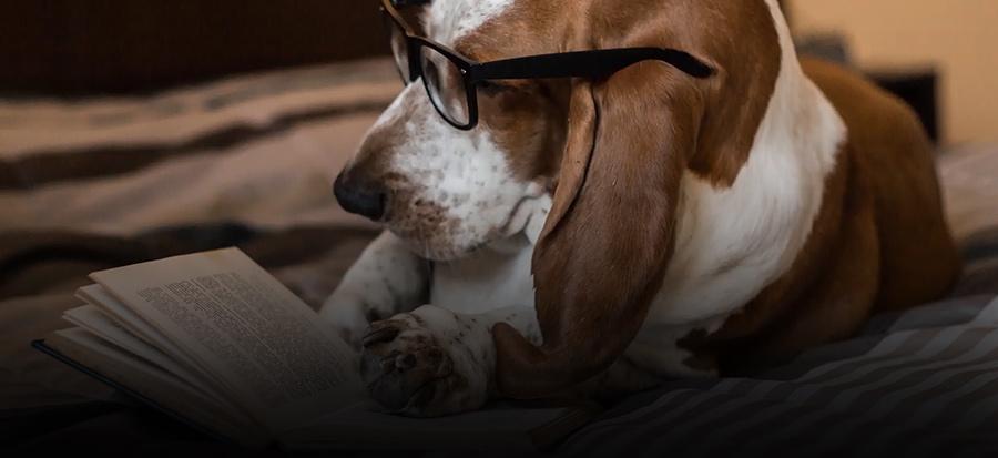 Chiedi al nostro bassotto quale è il miglior cibo per cani per qualità e nutrizione | Imperial Food
